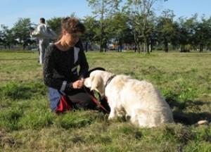 Тестирование собаки