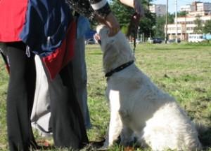 Факторы, влияющие на дрессировку собаки